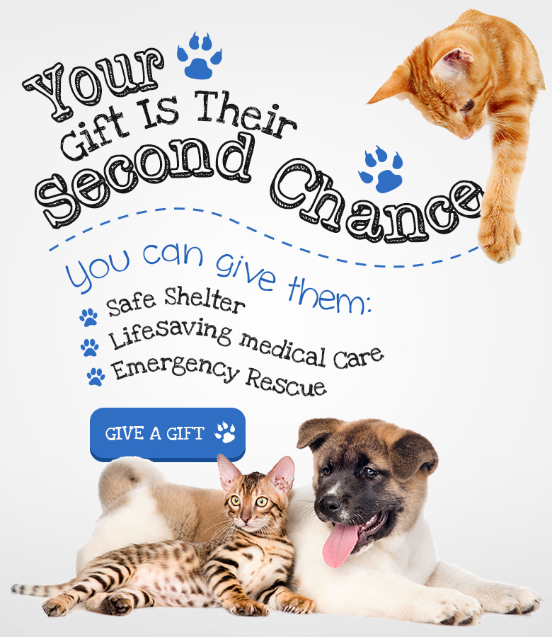 Donate Pillows Animal Shelter : Sanilac County Humane Society ? Sanilac, MI